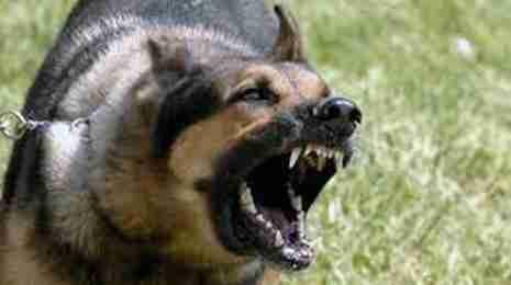 guard dog home protection